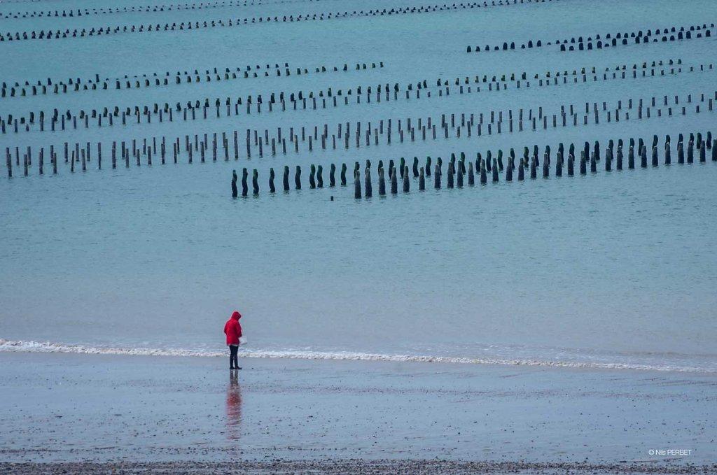 Mussels field