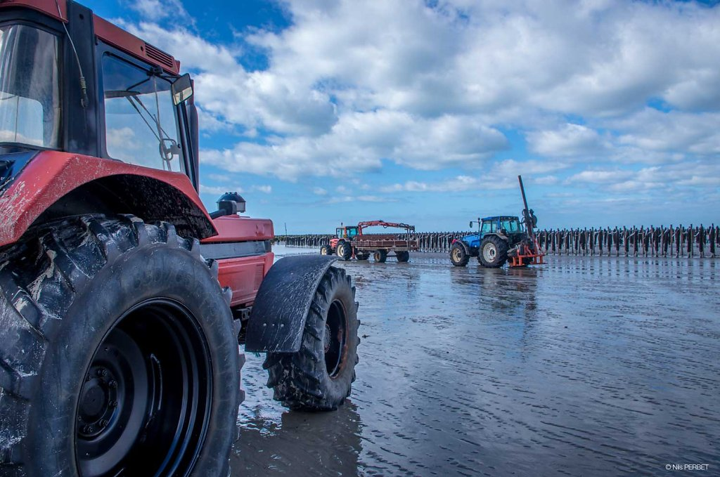 Farming on a mussels field